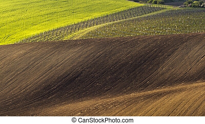 Spring landscape with field and vineyard - Spring wavy...