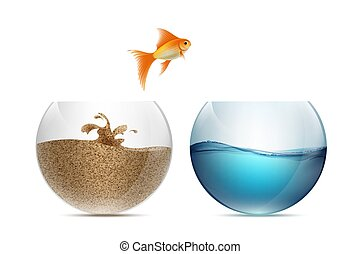 Gold fish jumping out of the aquarium. Aquariums with sand and w