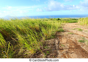 Sugar Cane fields of St Kitts - A dirt road running through...