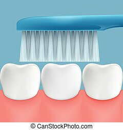 Human teeth and toothbrush. Oral hygiene. Stock Vector...
