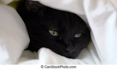 Black cat lies wrapped in a warm blanket