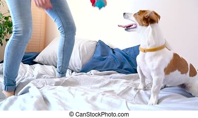 Girl jumping on bed together with dog - Woman jumping on bed...