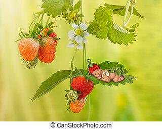 neugeborenes,  baby, Pflanze, erdbeer