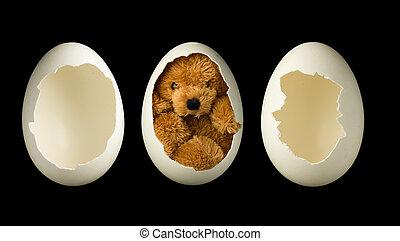 Empty eggs and teddy bear - Little teddy bear in an egg plus...