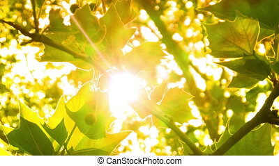 Bright Green Tree Leaves Glisten In The Sunlight