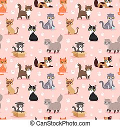Cat breed cute kitten pet portrait fluffy young adorable...