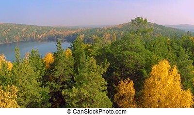 Forest in the fall lake in autumn view from the sky. Lake...