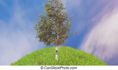 Birch in the meadow animation. Single birch tree standing on lake waterside on bright summer day