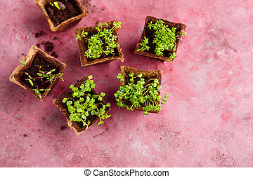 Different potted seedlings growing - Seedlings in...