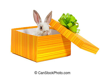 The rabbit in the yellow box with ribbon