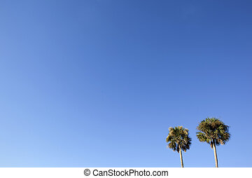 Two palm trees in a blue sky
