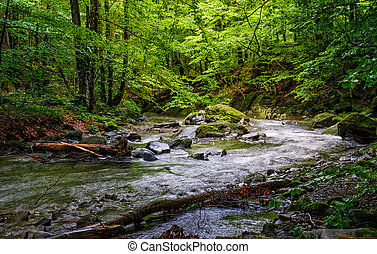 Rapid stream in green forest - Rapid stream flow through...