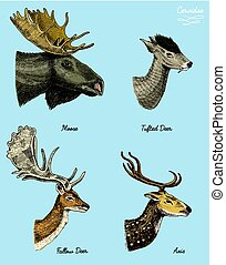moose or eurasian elk, tufted deer, roe or doe, axis vector...