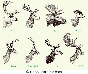 Big set of Horn, antlers Animals moose or elk with impala,...