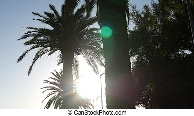 Silhouette of a palm tree at sunset. Montenegrin sunsets on sea