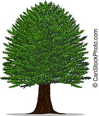 Yew tree on white background. - Tree vector by hand...