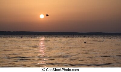 Seagulls fly over lake at dusk and dive into water - Scenic...