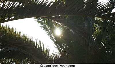Sunlight flashing through a branch of palm tree - Sunlight...