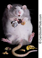 Fat Rat - A fat rat named Drucilla is eating candy and...