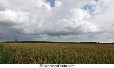 Time-lapse,white clouds flying on blue sky over yellow field wheat