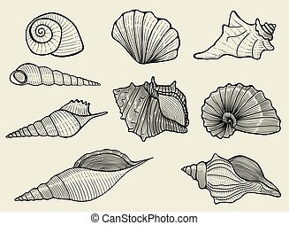 seashells on beige background - Vector illustration with...