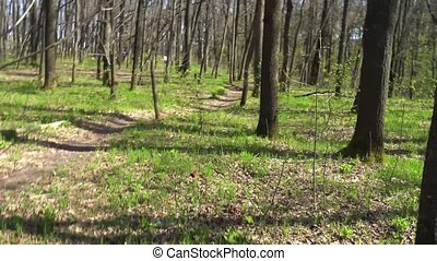 Spring Forrest. Fresh Green Woods in the Forest of Kursk