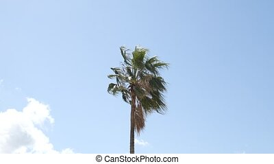 Palm tree top closeup on sea coast background