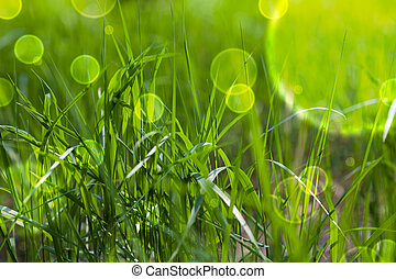 Fairy tale green grass - Fairy tale green spring fresh grass...