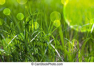 Tündér, Mese, zöld, fű