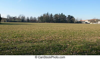 Uncultivated field in Parco Nord in the north of Milan -...