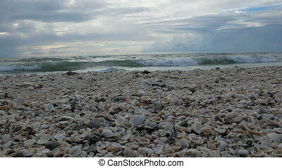 Shells on the beach at the Barefoot Beach State Preserve in...