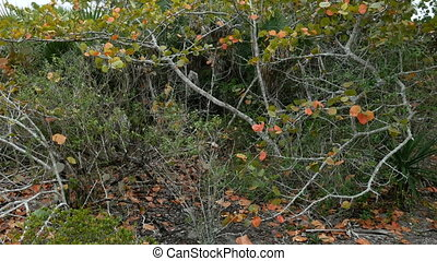Wild vegetation at the Barefoot Beach State Preserve in...