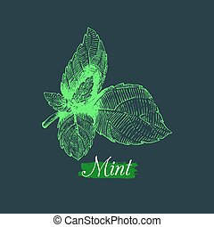 Vector mint illustration. Hand drawn aromatic plant and culinary herb sketch. Botanical drawing in engraving style.