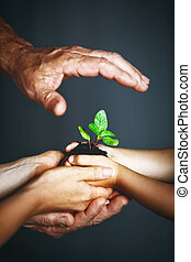 concept of family. Hands of mother, father and child hold a green plant
