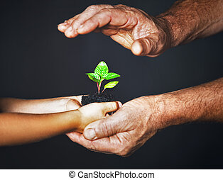 concept of family. Hands of  father and child hold a green plant