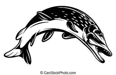 Vector monochrome pike - Vector monochrome illustration with...