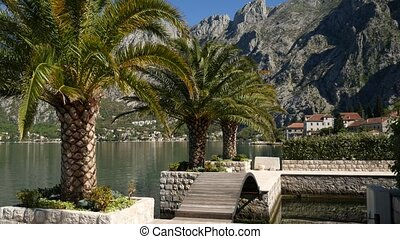 Palm trees on the docks in the Bay of Kotor, Montenegro