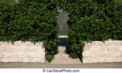 Arch from Pittosporum in Montenegro. Landscaping design of...