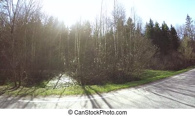 Asphalt road in the forest - Dynamic panorama of a forest...