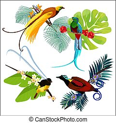 Colorful birds of paradise sitting on branches poster on white