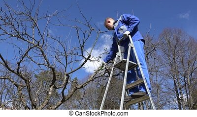worker man cut tree branch on ladder in spring time garden.