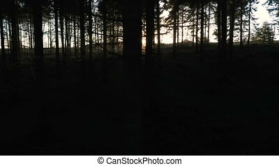 Sun flares shining through dark forest trees - Stabilised...