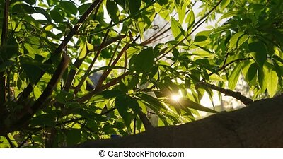 Leaves of elm in sunny day. Natural background with elm...
