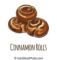 Cinnamon Rolls, full color hand drawn vector illustration