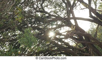 The glare of the sun through the branches