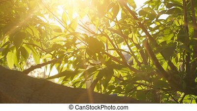 Elm in sunny day. Natural background with elm branches and young bright leaves in front of day sun flickering through.