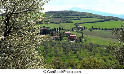 Spring. Blooming tree in the foreground and typical Tuscan...