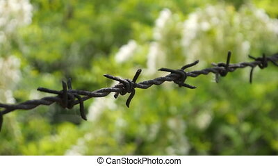 Barbed Wire Fence Against Grass