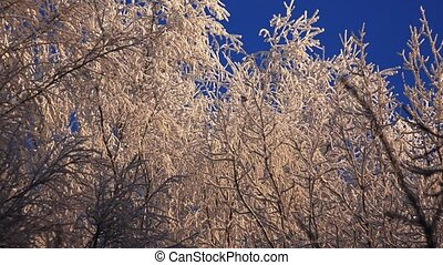 Winter Forest. Trees under snow. - Winter Forest. Trees...