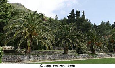 Palm tree top closeup on sea coast background - Palm tree...
